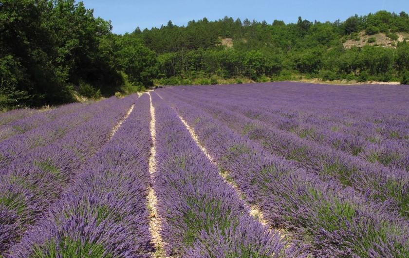 Location de vacances - Chalet à Lagrand - la provence ses odeures de lavande sa chaleur