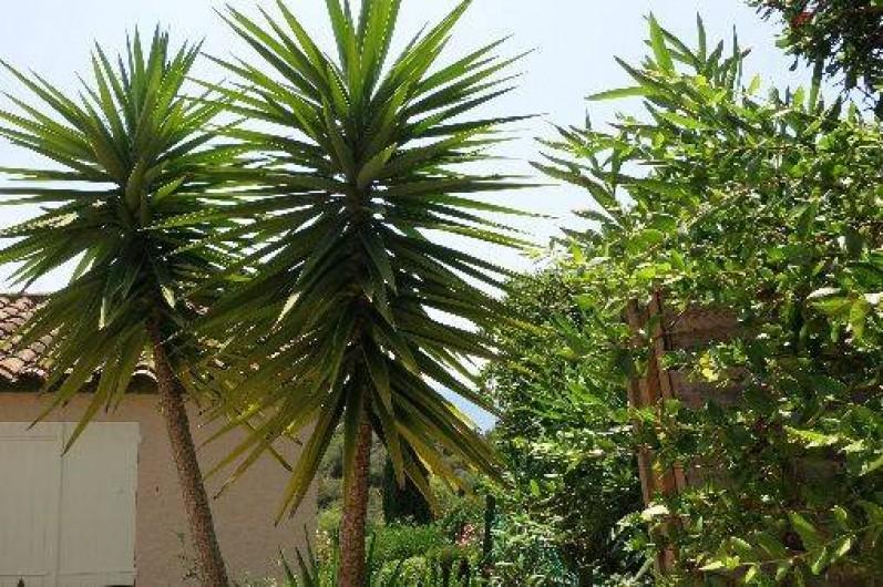 Location de vacances - Mas à Agay - Détail du jardin
