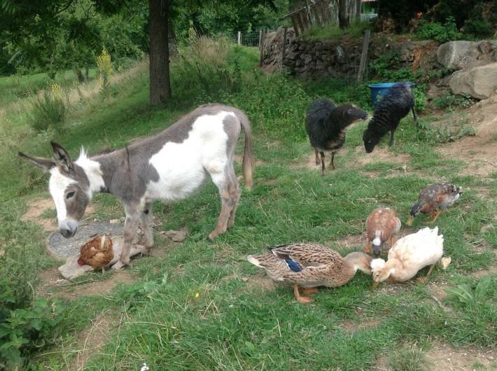Location de vacances - Gîte à Saint-Alban-d'Ay - Nos animaux