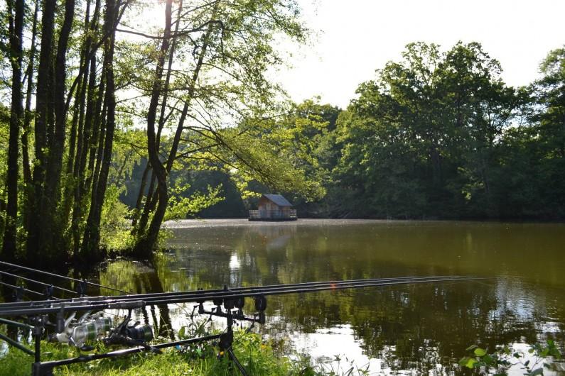 Location de vacances - Gîte à La Baconnière - Etang où la pêche no-kill est autorisée