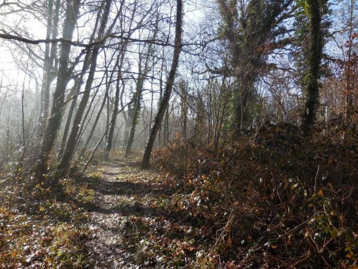 Location de vacances - Chambre d'hôtes à Laruscade - Chemin dans la forêt