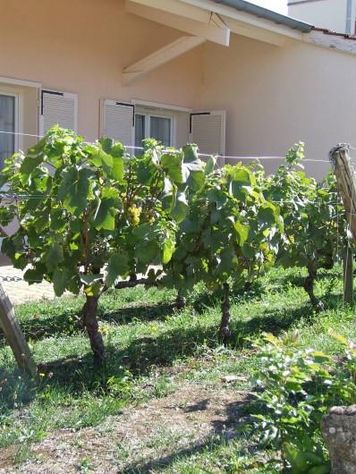 Location de vacances - Hôtel - Auberge à Chagny - Quelques rangs de vignes