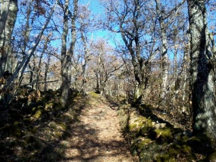 Location de vacances - Chambre d'hôtes à Pélussin - les bois de bouleaux et de hêtres en hiver