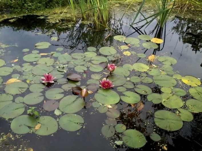 Location de vacances - Chambre d'hôtes à Pélussin - dans le jardin, une mare pour admirer, se reposer...