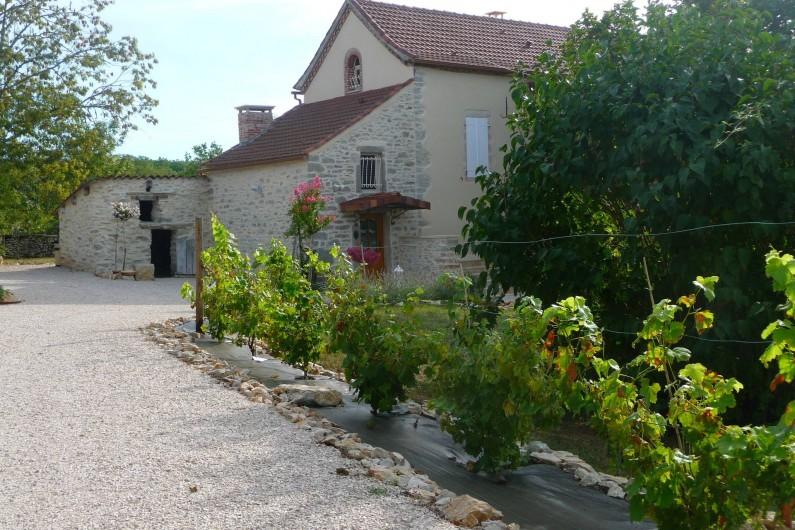 Location de vacances - Villa à Cahors - Allée principale, avec rang de vignes