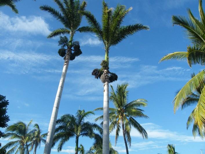 """Location de vacances - Appartement à Saint-Gilles les Bains - Les palmiers """"colonne""""  dans le jardin de CoCoThim."""