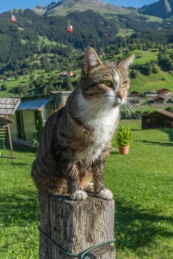 Location de vacances - Appartement à Grindelwald - notre chat Leo qui aime les pats