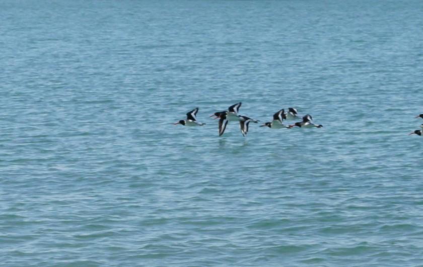 Location de vacances - Maison - Villa à Roscoff - vol d'oiseaux au-dessus de la mer