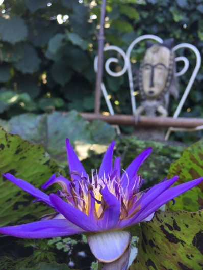 "Location de vacances - Chambre d'hôtes à Mérignac - Nénuphar "" star of zanzibar"" dans le jardin"
