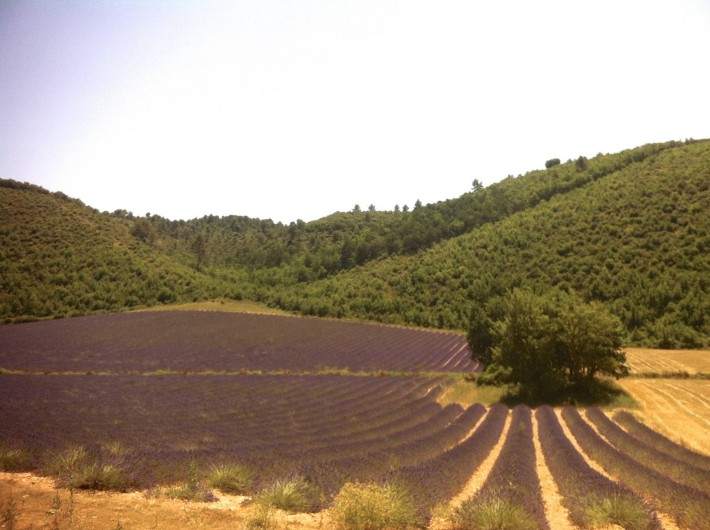Location de vacances - Studio à Aix-en-Provence - à quelques kilomètres les champs de lavande de Valensole