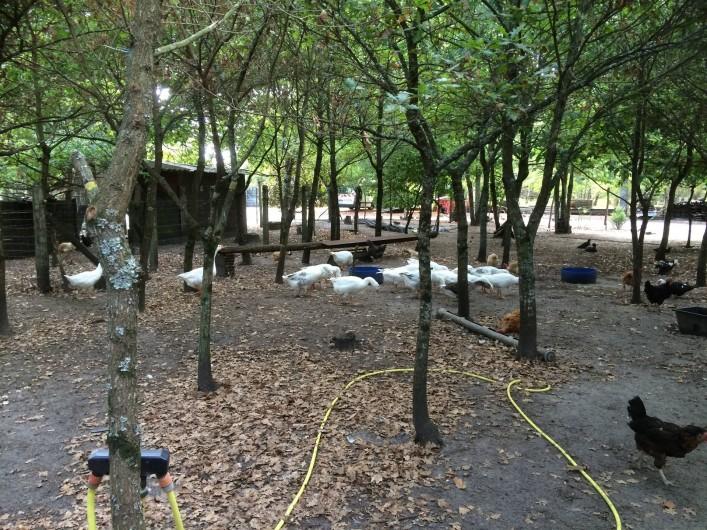 Location de vacances - Gîte à Lue - nos animaux dans l'enclos qui leur est  réservé... sous les chênes...