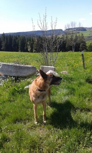Location de vacances - Chalet à Riotord - Nos amis les animaux sont les bienvenus