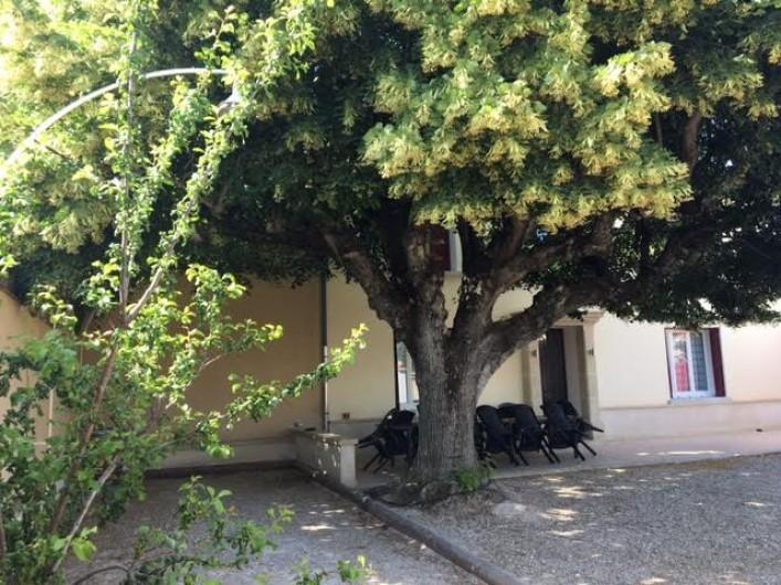 Location de vacances - Gîte à Carpentras - Terrasse et terrain de boules