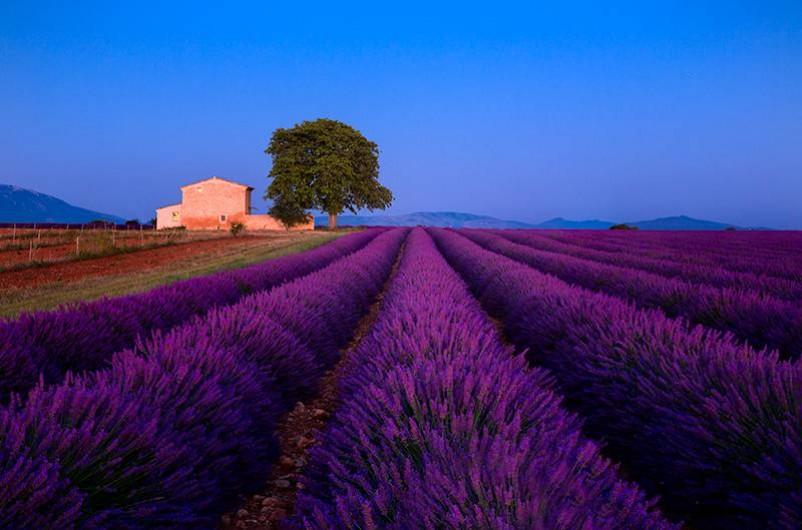 Location de vacances - Maison - Villa à Allemagne-en-Provence - le Plateau de Valensole