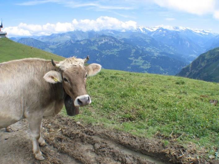 Location de vacances - Villa à Lungern - Vaches dans les alentours