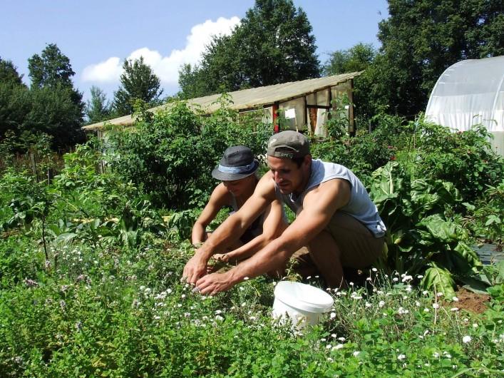 Location de vacances - Tipi à Saint-Vincent-en-Bresse - Vous aimerez peut-être cueillir vos plantes à tisane ! c'est tellement agréable