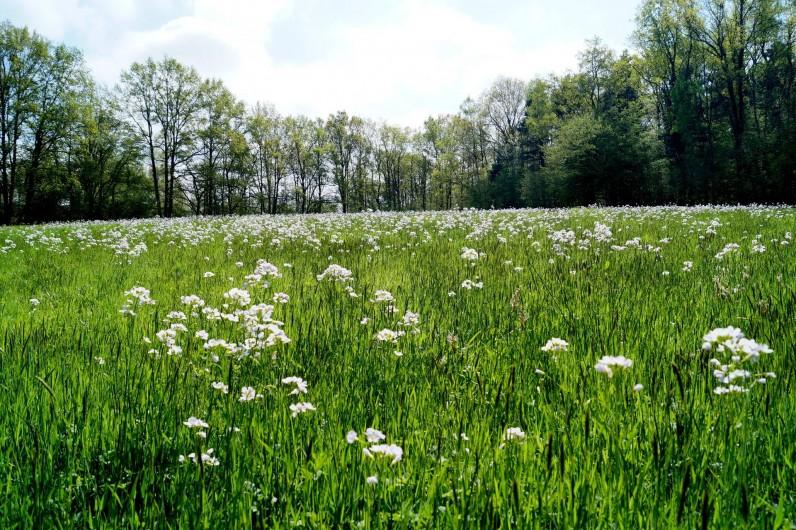 Location de vacances - Tipi à Saint-Vincent-en-Bresse - ou tout simplement vous faire une belle ballade tranquille !