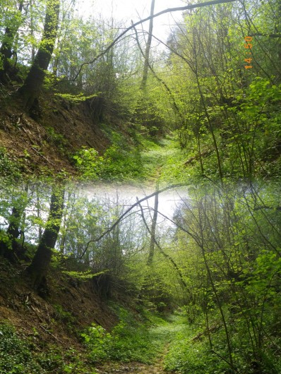 Location de vacances - Tipi à Saint-Vincent-en-Bresse - Vous pourrez découvrir nos petits sentiers si jolis