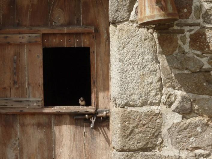 Location de vacances - Gîte à Cancale - Dans cette cave logent nos fidèles hirondelles
