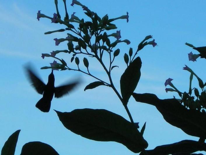 Location de vacances - Appartement à Deshaies - colibri