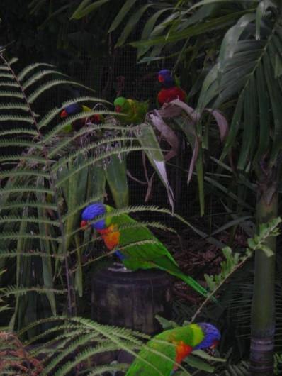 Location de vacances - Appartement à Deshaies - Les loris du jardin botanique
