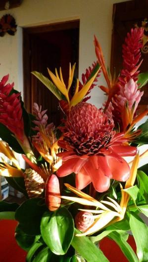 Location de vacances - Appartement à Deshaies - les fleurs du jardin