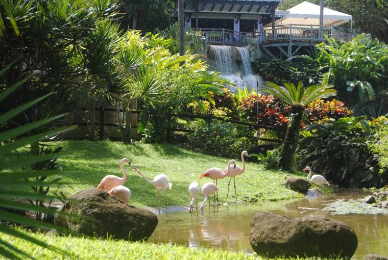 Location de vacances - Gîte à Deshaies - Le jardin botanique de Deshaies