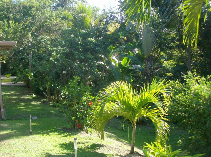Location de vacances - Gîte à Deshaies - une partie du jardin