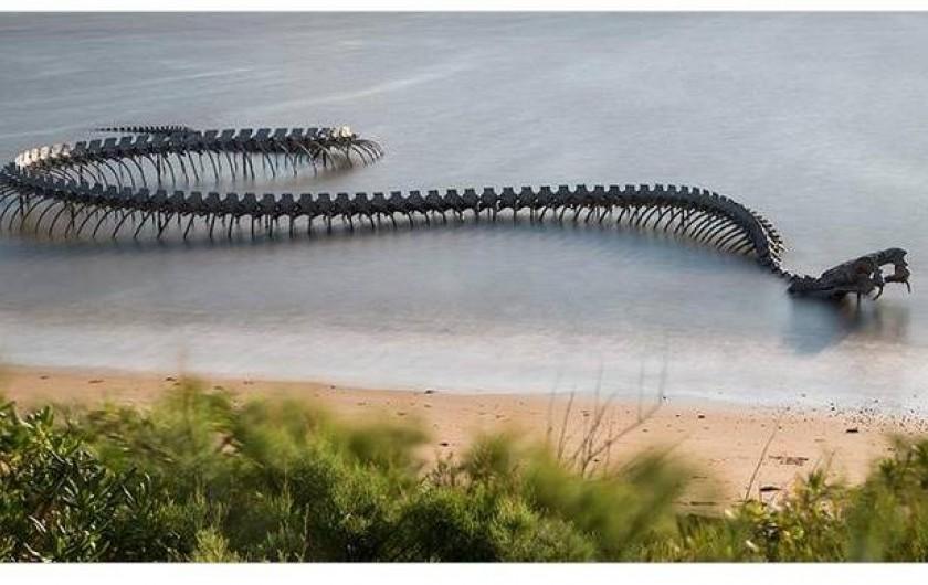 Location de vacances - Bungalow - Mobilhome à Saint-Brevin-les-Pins - Serpent dans la mer à St Brévin