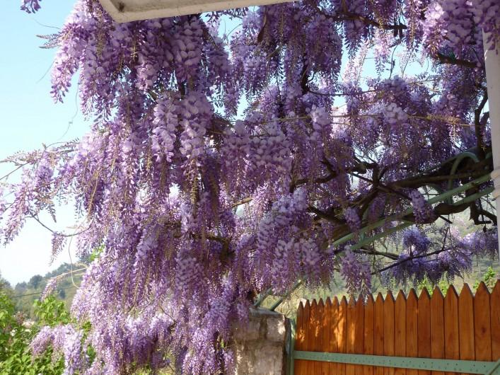 Location de vacances - Villa à Cantaron - Le portail de  l'entrée avec la glycine