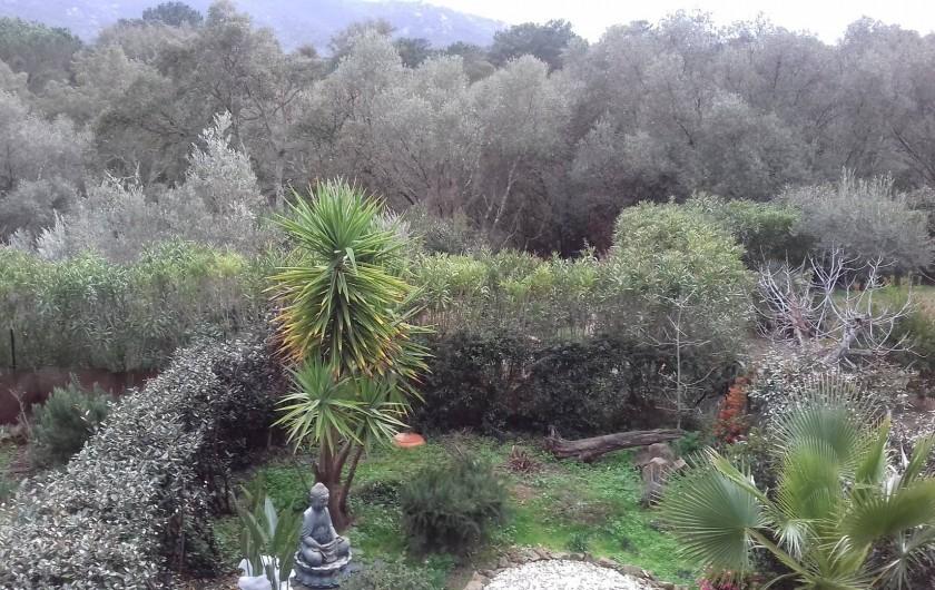 Location de vacances - Appartement à Porto-Vecchio - Vue sur le jardin du RDC