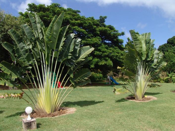 Location de vacances - Bungalow - Mobilhome à Le François - les bungalows et villas sont situés dans un magnifique parc de 9000 m2.