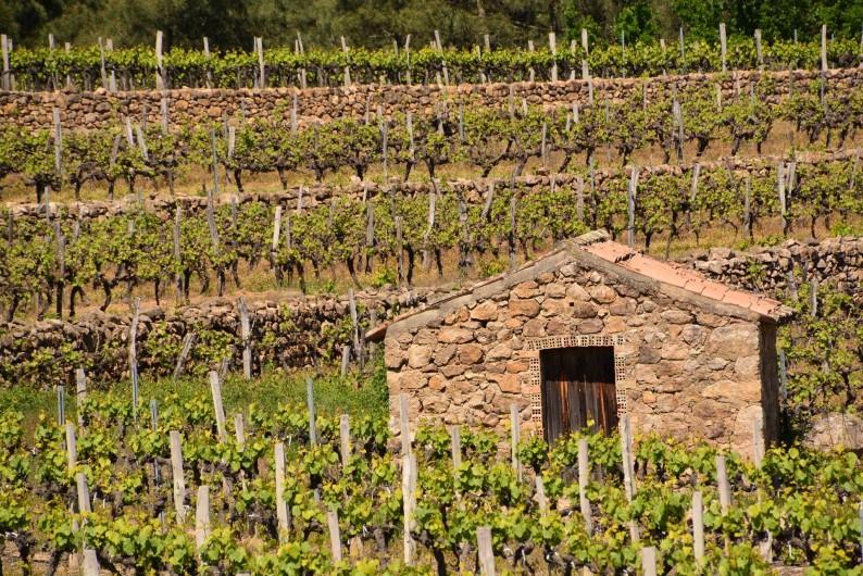 Location de vacances - Gîte à Les Assions - promenade dans les vignes