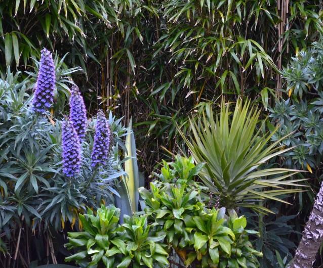 Location de vacances - Chambre d'hôtes à Lanildut - Jardin exotique