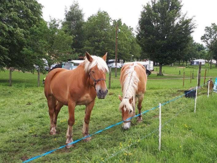 Location de vacances - Camping à Langogne - Accueil des chevaux