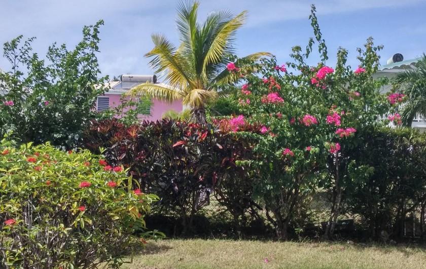 Location de vacances - Appartement à Sainte-Anne - La haie de bougainvilliers