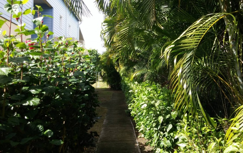 Location de vacances - Appartement à Sainte-Anne - Une allée du jardin