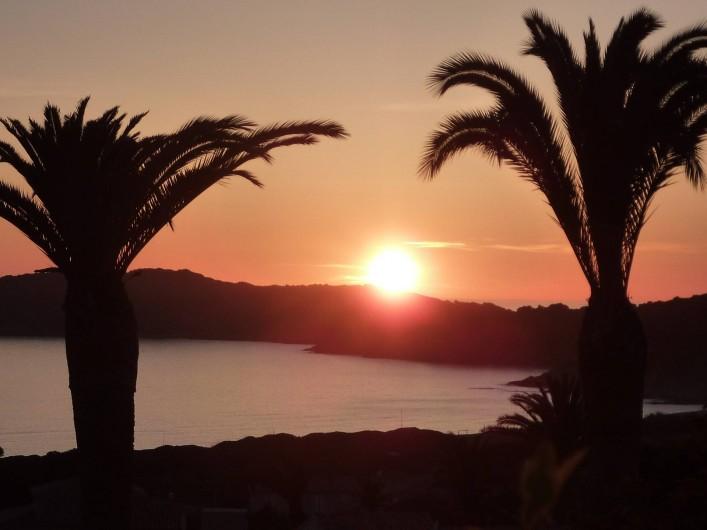 Location de vacances - Villa à Cargèse - coucher de soleil entre les palmiers