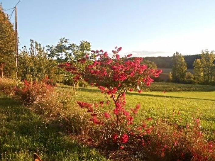 Location de vacances - Chambre d'hôtes à Tournon-d'Agenais - Les prairies alentours