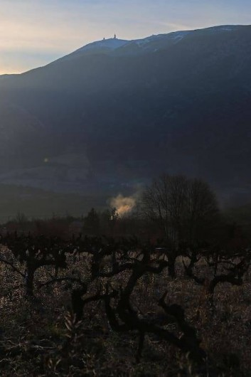 Location de vacances - Gîte à Mollans-sur-Ouvèze - Ventoux au matin depuis notre champ