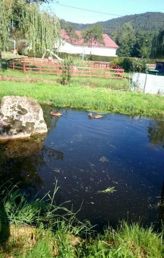 Location de vacances - Hôtel - Auberge à Tendon - Notre petit étang à truites derrière l'auberge