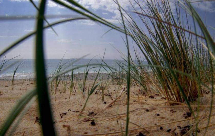 Location de vacances - Villa à Plouhinec - La plage aux alentours!!!