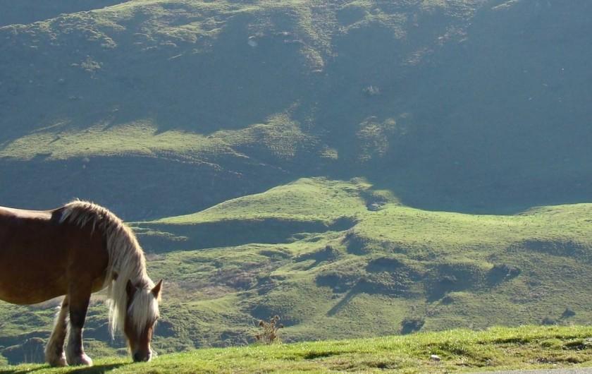 Location de vacances - Chambre d'hôtes à Arrens-Marsous - la montagne, notre environnement