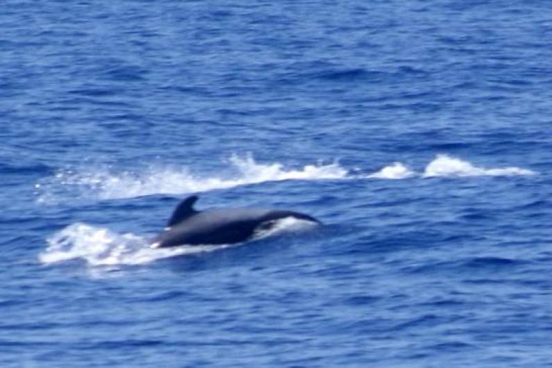 Location de vacances - Appartement à Los Cristianos - Excursion pour voir les dauphins