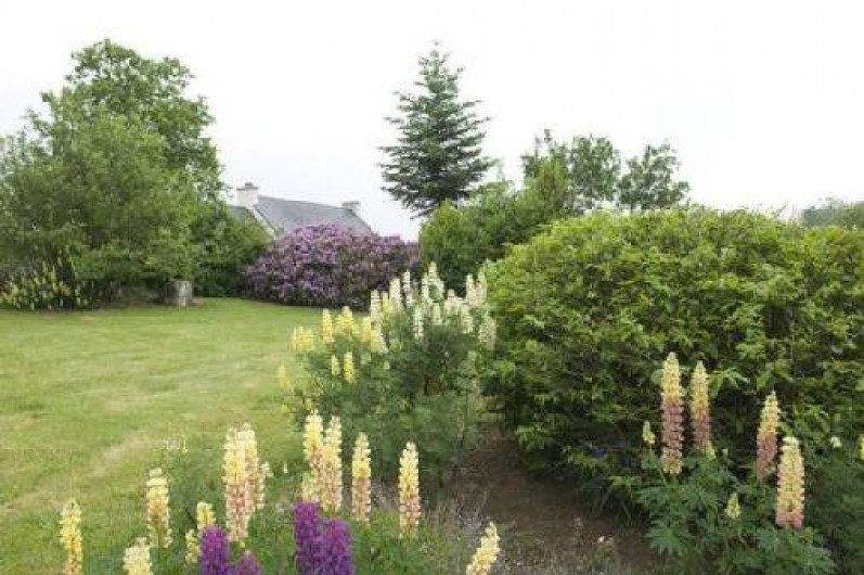 Location de vacances - Gîte à Loc-Eguiner-Saint-Thégonnec - jardin au printemps