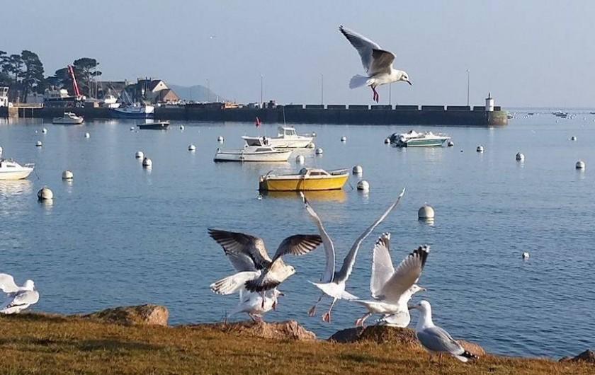 Location de vacances - Appartement à Perros-Guirec - port de perros-guirec