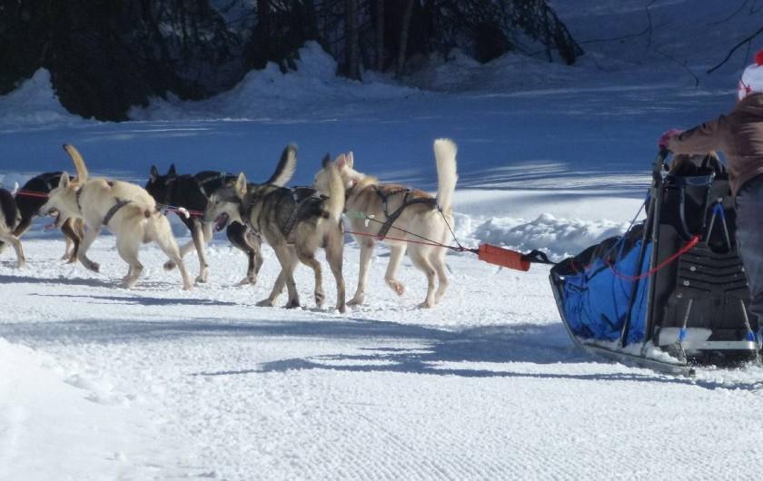 Location de vacances - Chalet à Le Praz de Lys - Promenade en chien de traîneau à réserver à l'office du tourisme