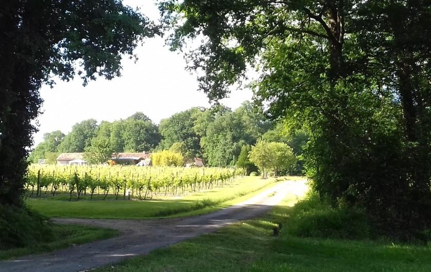 Location de vacances - Gîte à Vanzac - En bois et vignes