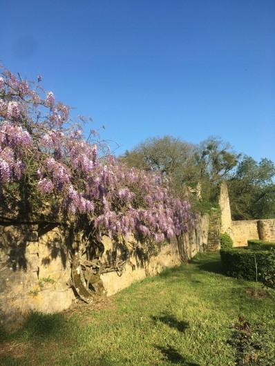 Location de vacances - Château - Manoir à Montreuil-Bonnin - La glycine au printemps
