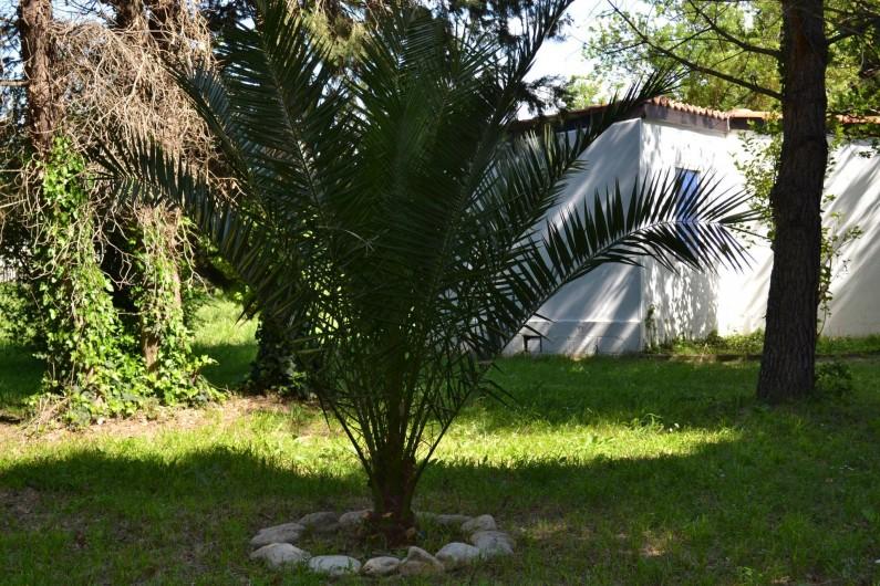 Location de vacances - Villa à Argelès-sur-Mer - Extérieur jardin